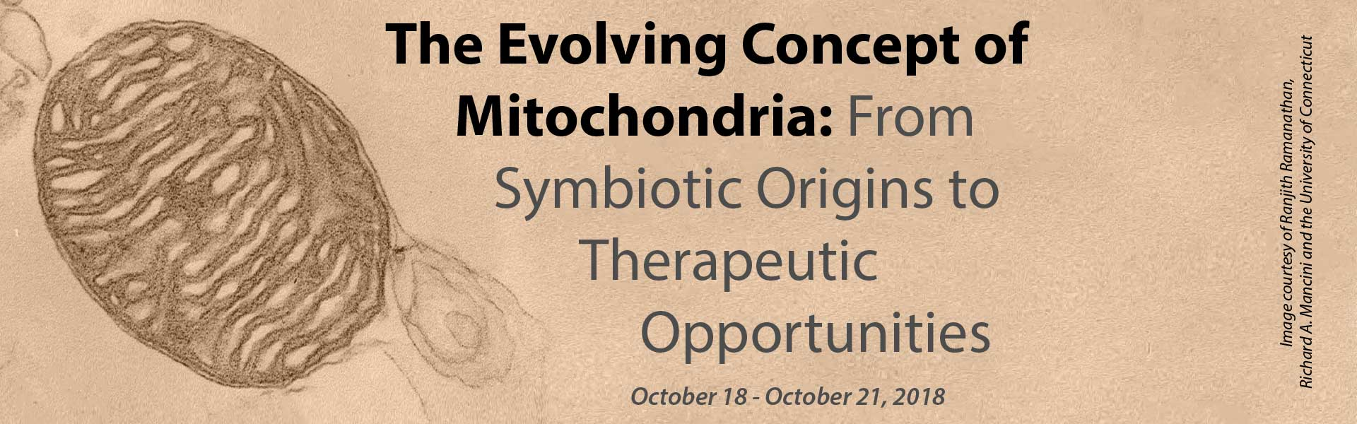 Mitochondria Meeting: From Symbiotic Origins to Therapeutic Opportunities