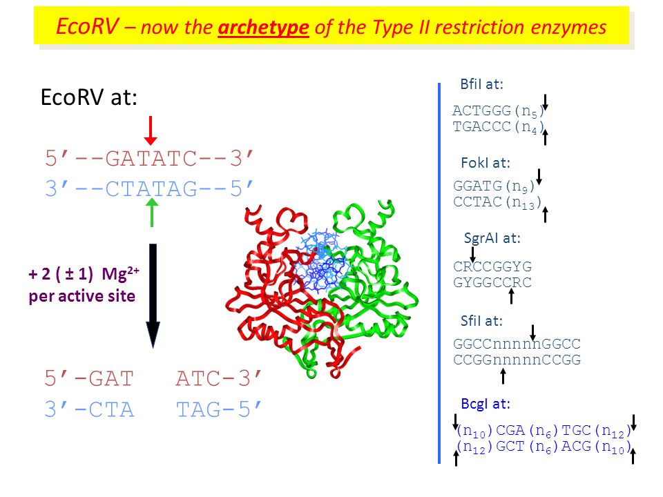 Steve Halford Type II Restriction Enzymes Searching For One Site And Then Two